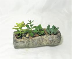Succulet_Garden_Log