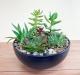 Large_succulent_garden