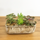 Succulent_Garden_Distressed_planter