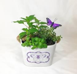 Butterfly_Herb_Garden
