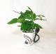 Coffee_Plant_2019